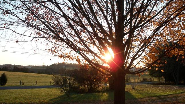 sun-thru-trees-front-yard