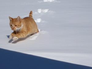 indy-snow