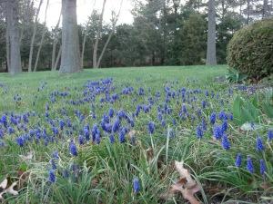 purp-flowers1